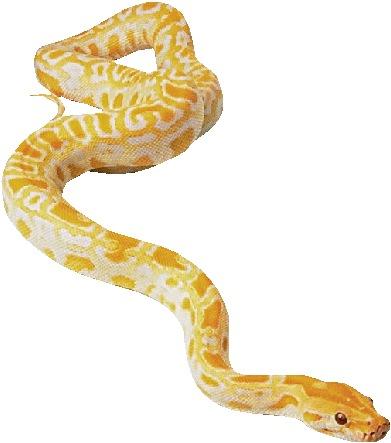 serpiente_horoscopo-chino