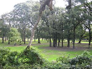 BOSQUE DE PALERMO